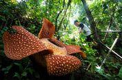 Selain Indonesia, di Mana Bisa Kita Temukan Bunga Rafflesia?