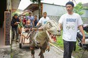 'T-Rex' Berjalan Penarik Gerobak di Jogja, Buah Karya Remaja Lulusan SMK