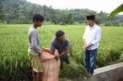 Soal Kedaulatan Pangan, Dedi Mulyadi Bilang Perlu Belajar ke Kampung Baduy