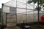 Greenhouse Marunda yang Diresmikan Jokowi, Hidup Segan Mati Tak Mau