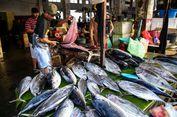 Makan Ikan Segar Asal Berau, Tak Perlu Lagi Terbang ke Borneo