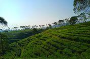 6 Produk Pangan di Indonesia Dibudidayakan Petani China