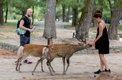 Hati-hati, Ini Cara Beri Makan Rusa di Nara Park Jepang