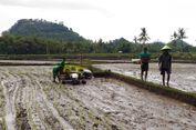 Kinerja Sektor Pertanian Wujud Implementasi Nawacita