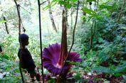 Bunga Bangkai, Si Cantik yang Terus Dibantai