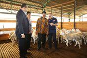Indonesia Sia   p Ekspor 60.000 Ekor Domba Ke Malaysia