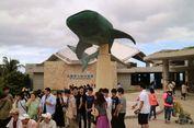 4 Hal Menarik yang Bisa Anda Lakukan di Churaumi Aquarium Okinawa, Jepang