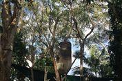 Jalan-jalan ke Gold Coast dengan Anak, Harus ke Mana?