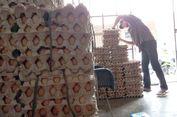 Kementan Siapkan Solusi untuk Harga Telur Ayam yang Meroket