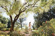 Lokasi Terbaik Melihat Bunga Liar Bermekaran di Australia Barat