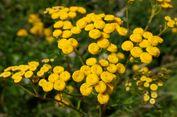 Rahasia Awet Muda dengan Bunga Abadi
