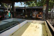 Liburan ke Sanur, Yuk Ikut Wisata Konservasi Penyu