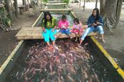 Sungai Bekas Jamban Disulap Jadi Tempat Wisata Ikan