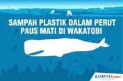 INFOGRAFIK: Sampah Plastik dalam Perut Paus yang Mati di Wakatobi