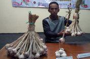 Kisah Bejo, Petani Asal Karanganyar Kembangkan Bawang Putih 'Tawangmangu Super'