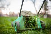 Seperti Hujan, Kenapa Bau Rumput yang Baru Dipotong Menyegarkan?