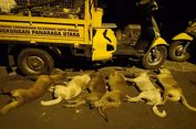 Antisipasi KLB Rabies, Ratusan Anjing Liar di Kota Mataram Diracun