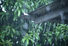 Waspadai Hujan Disertai Petir dan Angin di Jakbar, Jaksel, dan Jaktim