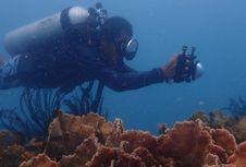 Diving Tanpa Perlu Sertifikat Menyelam, Apa Bisa?