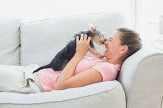 Haruskah Kita Bicara Manis pada Anjing, Seolah Mereka Bayi?