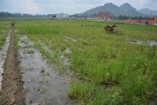 Demi Kepastian Investasi, Jokowi Minta Draft RDTR Dimatangkan