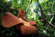 Festival Bumi Rafflesia Kembali Digelar, 6 Negara Sahabat Turut Hadir