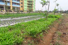 Dulu Bisa Raup Rp 15 Juta Per Bulan, Pertanian di Rusun Marunda Kini Lesu