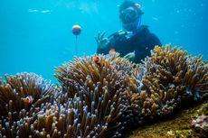 Bersama Nemo 48 Jam di Laut Bangsring Banyuwangi