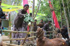 Ritual Gumbregan, Saat Sapi dan Kambing di Yogyakarta Diberi Makan Nasi
