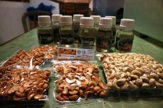 Berkunjung ke Sentra Kacang Mete Organik di Flores Timur