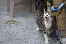 375 Ekor Kucing Diselamatkan dari Rumah Jagal Ilegal di China