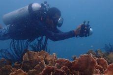 5 Hal yang Tak Boleh Dilakukan Saat Menyelam di Kepulauan Seribu