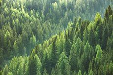 Perlu Berapa Banyak Pohon agar Kita Selamat dari Perubahan Iklim?
