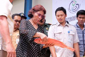 Susi Perlihatkan Video Tangkapan Ikan di Jawa Timur yang Melimpah tanpa Cantrang