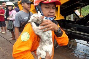 Cerita Hari Selamatkan Kucing Panik Terjebak Dekat Lumpur Usai Banjir Bandang Banyuwangi