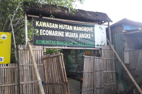 Hutan Mangrove Ecomarine, Oase di Sudut Kampung Nelayan Muara Angke