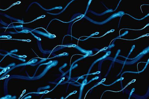 Keguguran Berkali-kali Bisa Disebabkan oleh Sperma yang Rusak