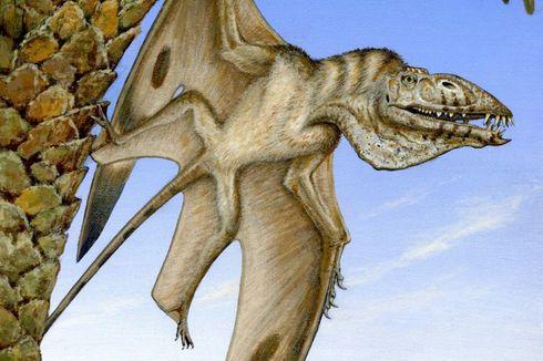 Kali Pertama Ahli Temukan Fosil Reptil Terbang Raksasa di Gurun Utah