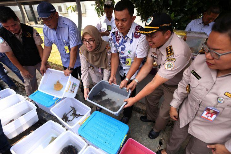 Sejumlah binatang hasil sitaan ditunjukkan saat rilis terkait kasus penyelundupan satwa di Gedung Balai Instalasi Karantina Hewan dan Tumbuhan Bandara Soekarno-Hatta, Tangerang, Kamis (14/9/2017). Sebanyak 65 ekor Kura-kura, 9 ekor Ular, 5 ekor Biawak, 10 ekor Buaya, 4 ekor Musang dan 8 ekor Lintah diamankan pihak karantina hewan saat penyelundupan melalui terminal 3 Bandara Soekarno-Hatta.