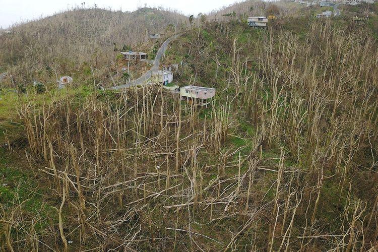 Rumah-rumah terlihat dikelilingi oleh pohon tumbang, seminggu setelah dilewati Badai Maria di San Juan, Puerto Rico, Rabu (27/9/2017). Di wilayah pulau AS yang terpaksa beraktivitas tanpa listrik, warga tengah berjuang untuk berbenah setelah dampak buruk akibat angin topan yang menyebabkan sedikitnya 33 kematian di Karibia.