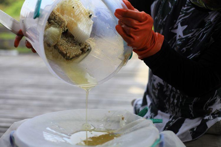 Proses panen madu hutan di Desa Semangit, Kecamatan Selimbau, Kabupaten Kapuas Hulu, Kalimantan Barat (27/10/2017). Proses panen madu hutan ini menggunakan teknik panen lestari sehingga panen bisa dilakukan lebih dari satu kali dalam setahun.