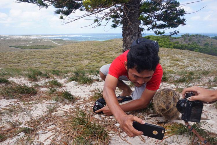 Wisatawan berusaha swafoto dengan quokka di Pulau Rottnest, Australia Barat. Foto diambil pada Jumat (9/2/2018).