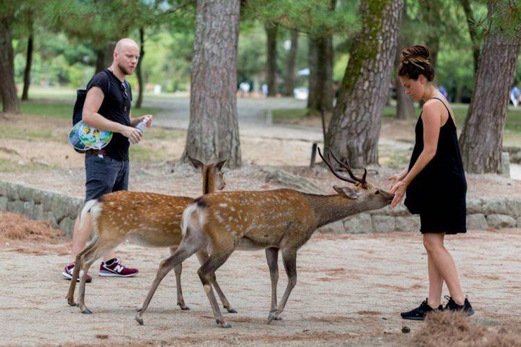 Wisatawan memberi makan rusa di Nara Park Jepang.