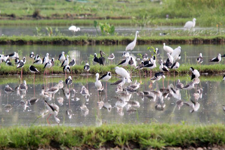 Berbagai jenis burung hidup dan tinggal Danau Limboto. Danau ini kaya endapan lumpur karena menjadi muara dari 23 sungai.