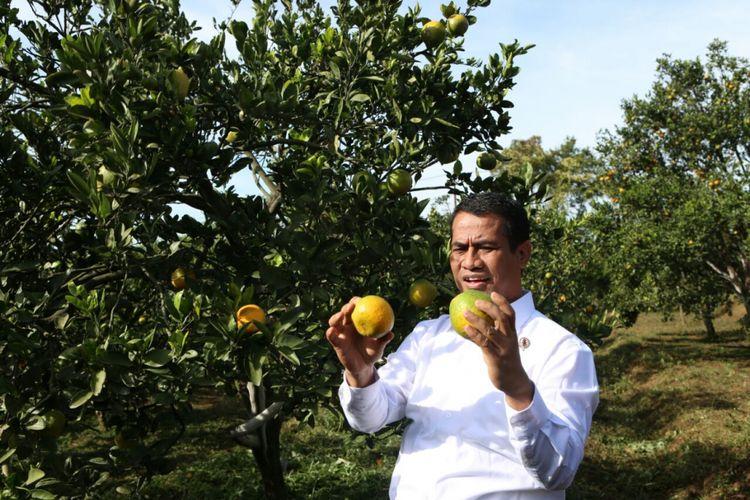 Menteri Pertanian. Andi Amran Sulaiman, menunjukkan jeruk di Balai Penelitian Tanaman Jeruk dan Buah Subtropika (Balitjestro) yang terletak di Desa Tlekung, Kecamatan Junrejo, Kota Batu, Jawa Timur, Jumat (25/5/2018)