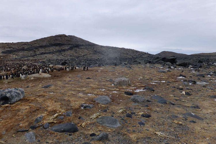 Kuburan massal yang berisi mumi penguin