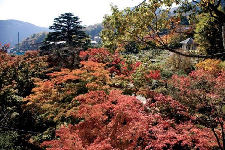 Hakone Gora Park, terbentang keindahan alam yang luar biasa di wilayah ini.