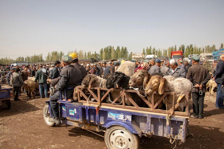Hewan-hewan yang siap diperdagangkan di Sunday Livestock Market, Xinjiang, Tiongkok.