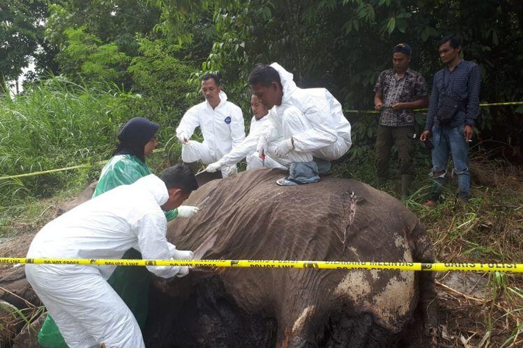 Tim Dokter Balai Konservasi Sumber Daya Alam Bksda Aceh Proses Nekropsi Bangkai