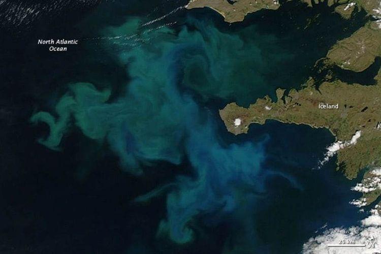 Fitoplankton mekar di lepas pantai barat Islandia diambil pada 24 Juni 2010.